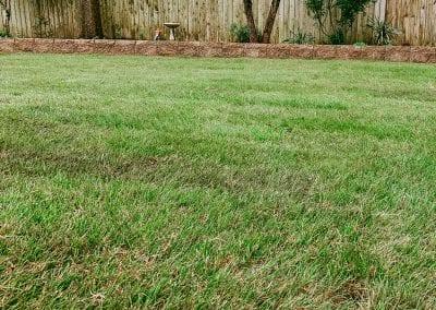 new sod in backyard