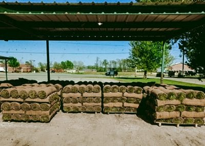 pallets of sod under shade