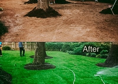 before and after of sod