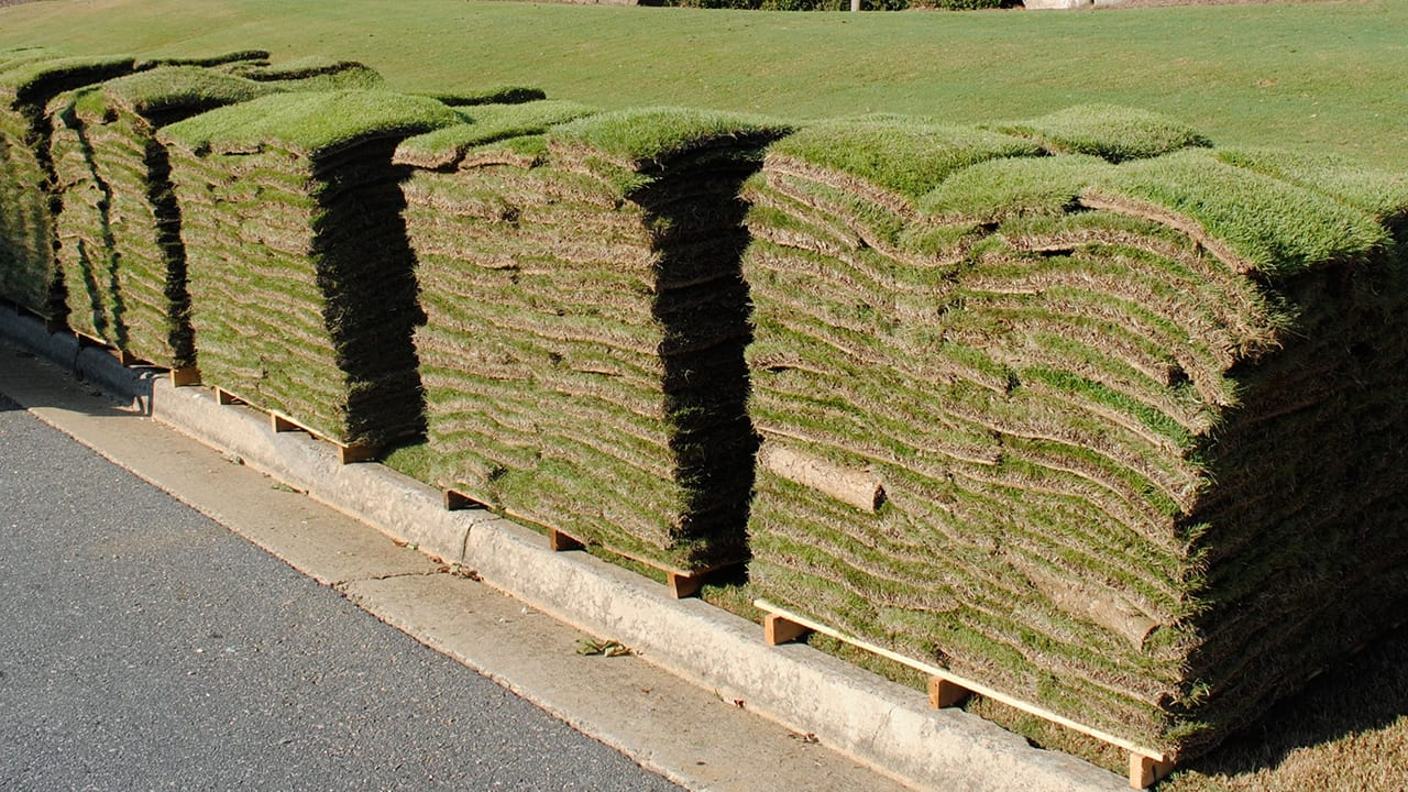 Meyers Zoysia Sod Picture